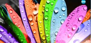 Как въздействат цветовете на психиката и тялото ни?