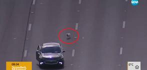 Десетки полицаи гониха две малки кучета по магистрала (ВИДЕО)