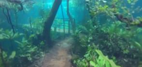 В Бразилия могат да се разхождат под вода (ВИДЕО)