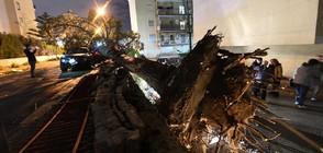 Осем души пострадаха от торнадо в Италия (ВИДЕО+СНИМКИ)