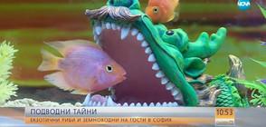 """ЕКЗОТИКА: Непоказвани у нас риби на изложба в """"Музейко"""" (ВИДЕО)"""
