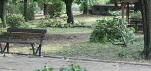 Аварийни екипи почистват паднали клони и дървета в столицата