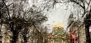 28 сигнала за паднали дървета и опасни ламарини в София