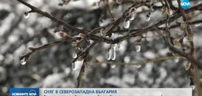 Сняг в Северозападна България: Много от овошките измръзнаха