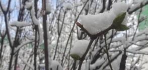 Оранжев код за силен вятър и сняг в четвъртък