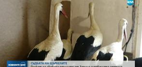 СЪДБАТА НА ЩЪРКЕЛИТЕ: Пускат на свобода птиците от Зарица скоро