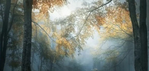 Българин - с награда на престижен световен фотоконкурс (ВИДЕО)