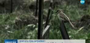 """В аванс от """"Миролюба Бенатова представя"""": Моргата пред затваряне?"""