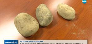 В САЩ въоръжават ученици с камъни срещу нападателите