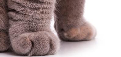 Най-красивите котки на изложба в София