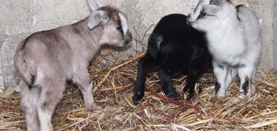 Родиха се три бебета в зоопарка във Варна (ВИДЕО+СНИМКИ)