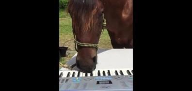 Кон свири на пиано (ВИДЕО)