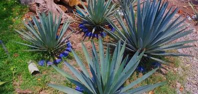 """""""Без багаж"""" открива тайните растения на ацтеките"""