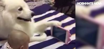 Животните, които се разбират чудесно с малки деца (ВИДЕО)