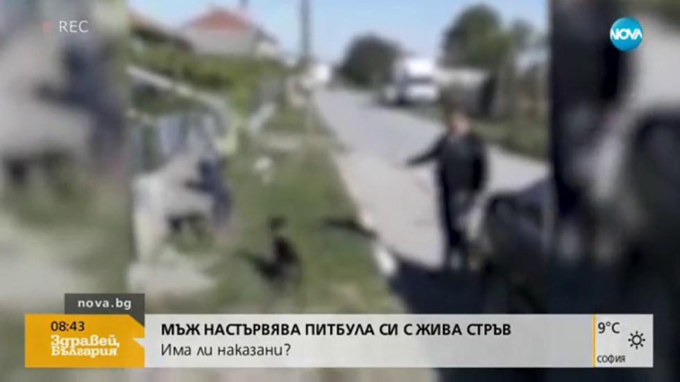 ШОКИРАЩО: Мъж насъсква питбул с жива стръв пред детето си (ВИДЕО)