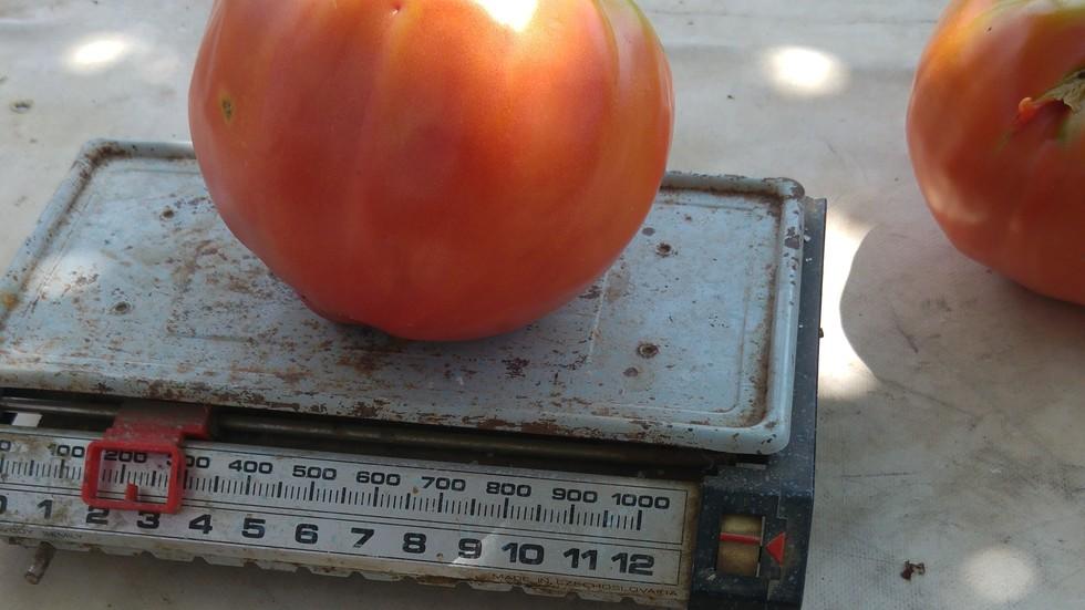 Розови домати гигант