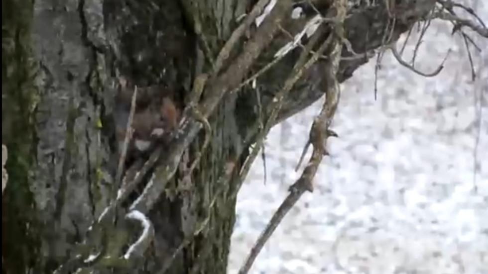 Катеричката наблюдава снеговалежа!