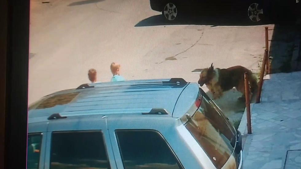 Бездомно куче нападна деца