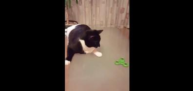 Котка играе със спинър