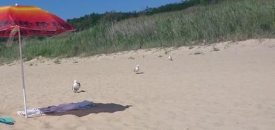 Ранен гларус на южният плаж Несебър