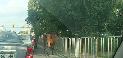 Животни на пътя