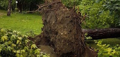 Бурята в град Луковит 2