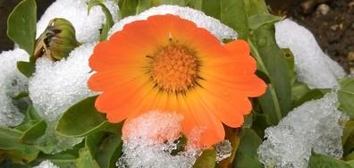 Очарованието на първи сняг в Етрополе