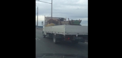 Магаре на магистрала