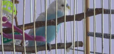 Говорящият папагал Белчо
