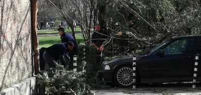 "Дърво падна в Парка ""Заимов"""