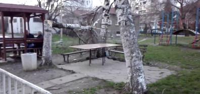 """Паднало дърво в столичния квартал """"Толстой"""""""