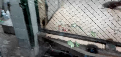 Плъхове тероризират маймуните в Софийския зоопарк