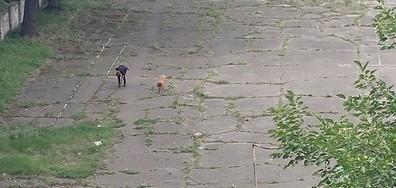 Домашни кучета в двора на училище в София