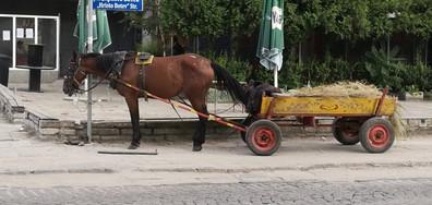 Коневръза в с. Войводиново, Пловдив