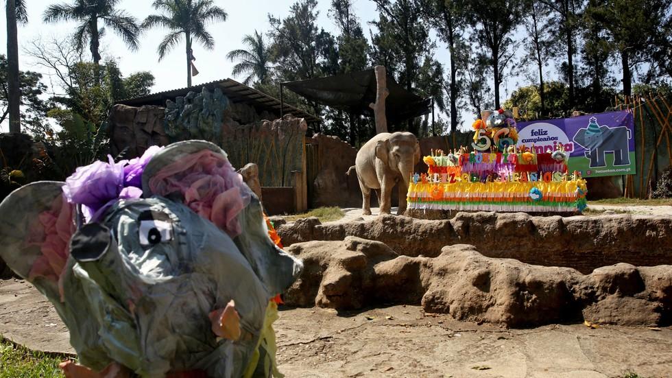105 килограмова торта за рождения ден на слоницата Тромпита