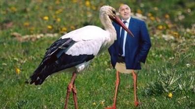 Щъркелите и блатните кокичета на Борисов – на подбив във Facebook