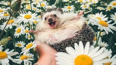 19 снимки, които ще ви накарат да се усмихнете