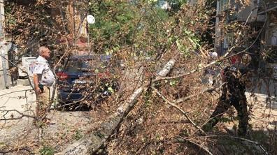 Дърво падна върху две коли в центъра на София