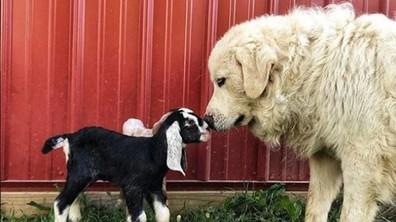 Необичайни приятелства между животни