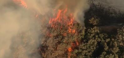 Кокаин в хлебче и пожарите в Калифорния отвисоко